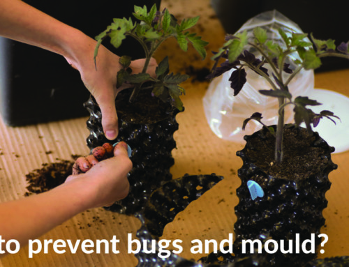 How to prevent bugs and mould?